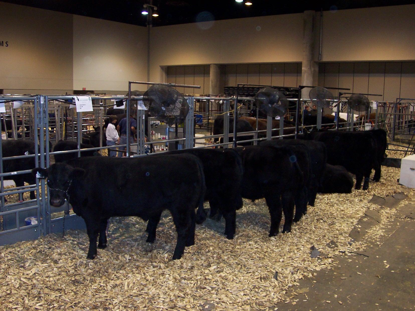 cattle-tie-panels
